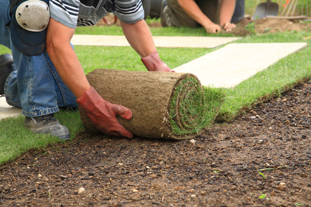 Nice How To Install Sod In New Jersey