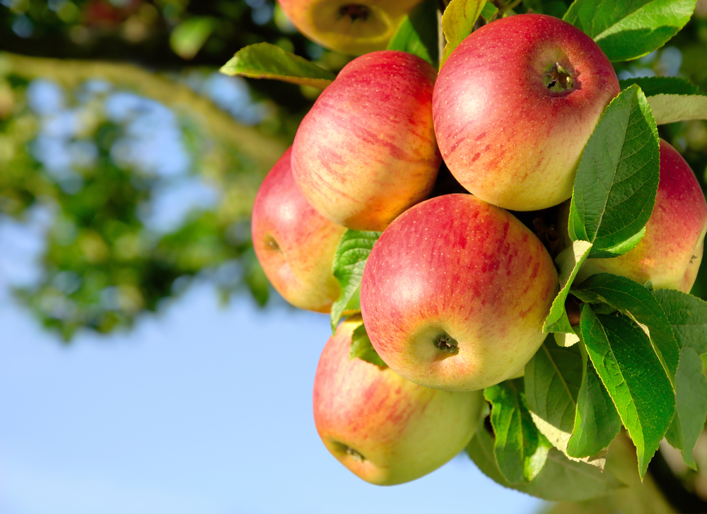 Fruit Trees For Landscaping Best In